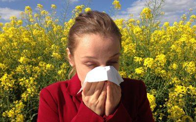Allergien und Darm